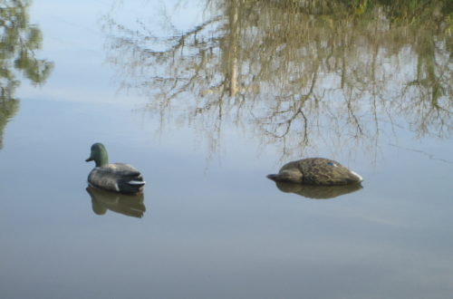 Lessons from A Duck